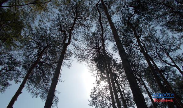 В Воронеже сохранят «Северный лес».