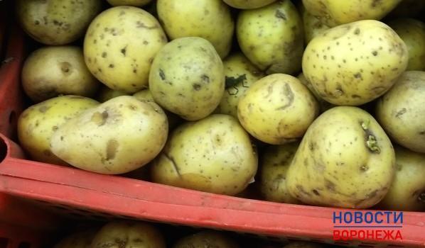 «Ашан» закупил картошку в карантинном районе.