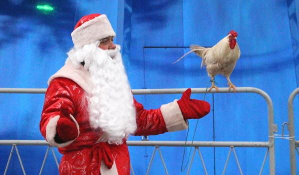 Дед Мороз с символом года - петухом.