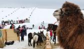 На Кудыкиной горе можно покататься на верблюдах даже зимой.