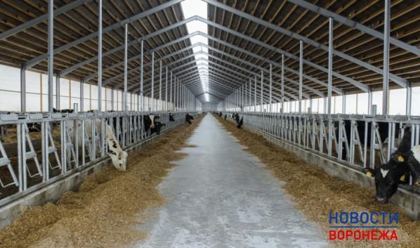 Новая ферма.