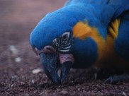 В зоопарке были вынуждены усыпить птиц.