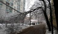 Сильный ветер способен валить деревья.