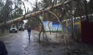 Дерево упало на провода.