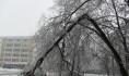 Сильный ветер и мокрый снег ломают ветки деревьев.