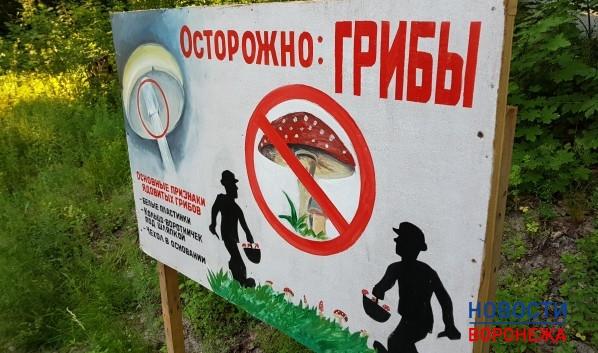 Воронежцев нелегально оштрафовали засбор грибов иягод
