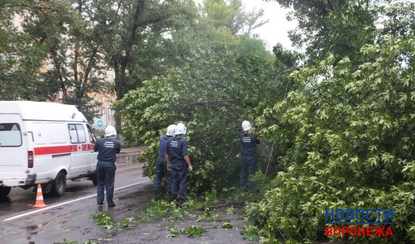 Cотрудники экстренных служб предупредили осильном ветре вВоронежской области