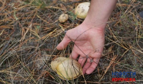 В2015 году вВоронежской области отравились грибами двое детей