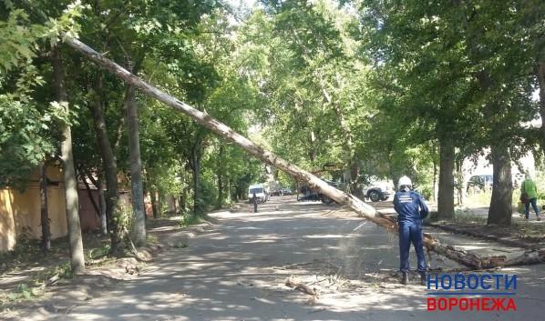ВВоронеже из-за сильного ветра упали минимум десять деревьев