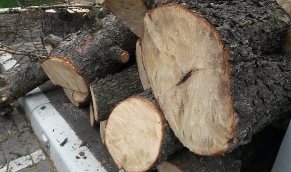 Спилят 47 деревьев.