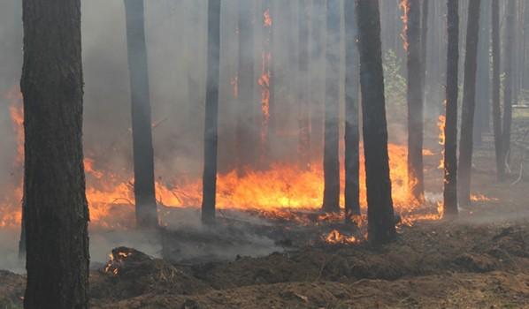 Огонь полыхает в лесу.