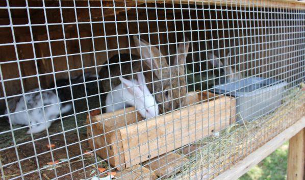 Воронежец украл кроликов.