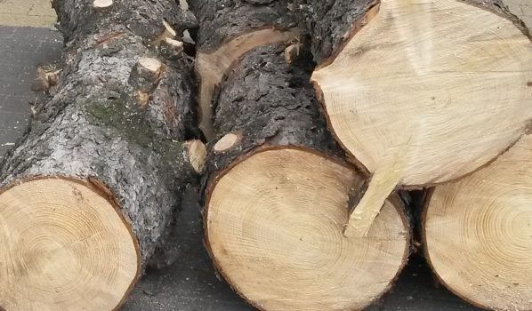 Будут спиливать аварийное дерево.