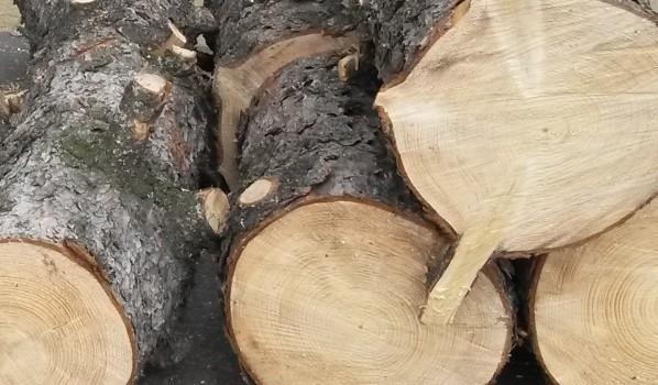 Мужчина спилил деревья, чтобы отапливать ими дом.