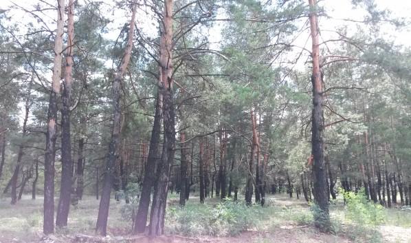 Искали девочку в том числе в лесу.