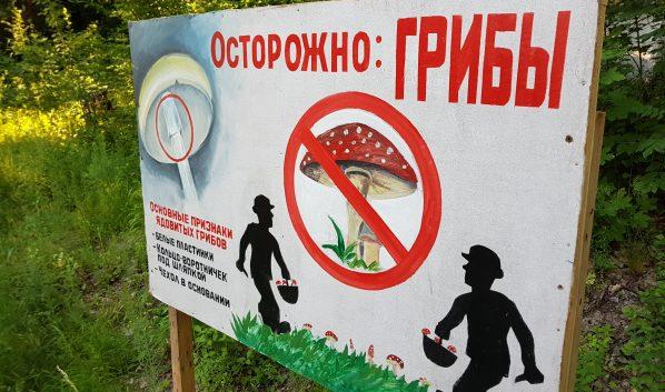Поаккуратнее с грибами!