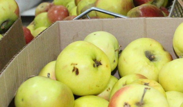 Мужчины грузили яблоки ящиками.
