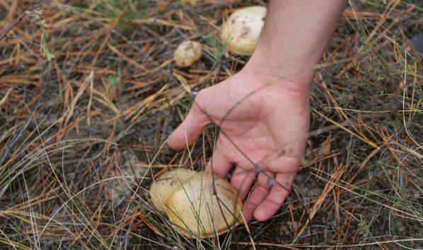Воронежцы отравились грибами.