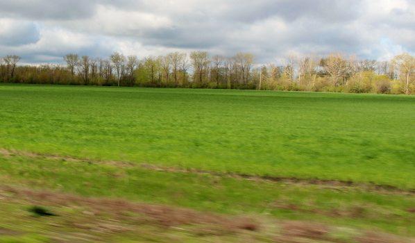 В собственность региона оформляют невостребованные земли.