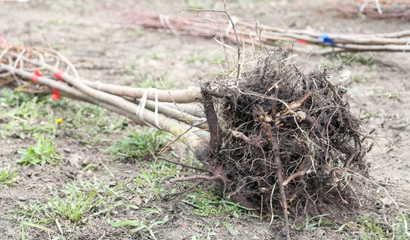 Высадят деревья.