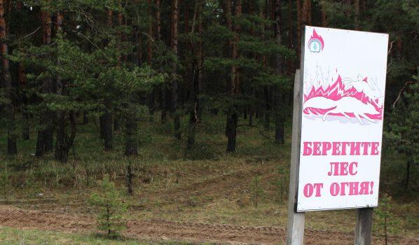 Сажают новые леса.