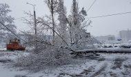 Дерево упало на провода и дорогу.