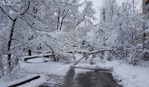 Деревья падали под весом снега.