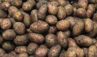 Сотрудник ночами похищал картошку.
