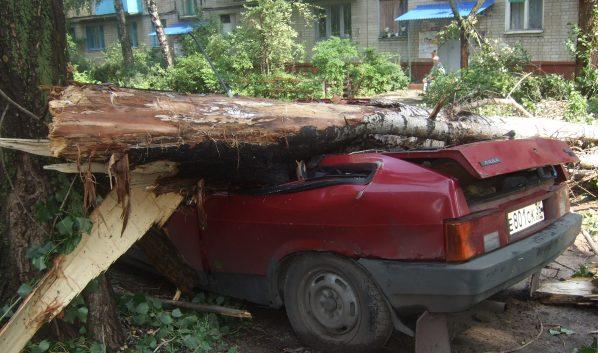 Сильный ветер способен повалить дерево.