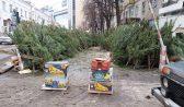 Натуральные новогодние деревья.