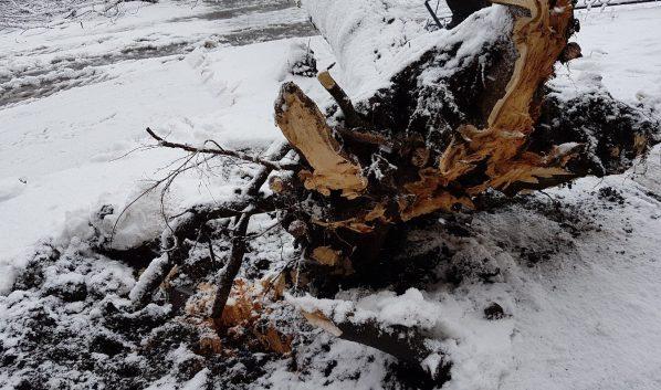 Из-за сильного ветра могут падать деревья.