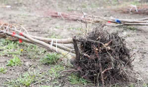 Деревья и кустарники нашли.