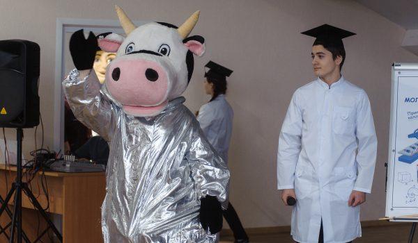 Выступление отважной коровы.