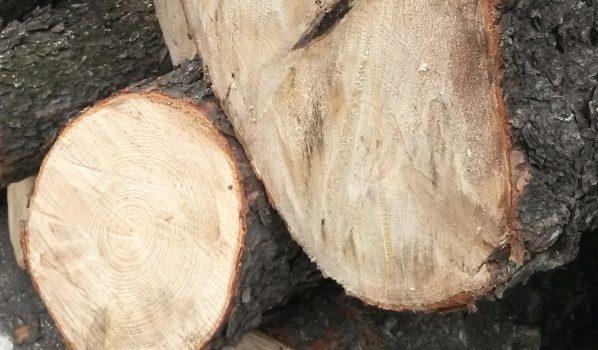 Мужчина нелегально спилил сразу 5 деревьев.