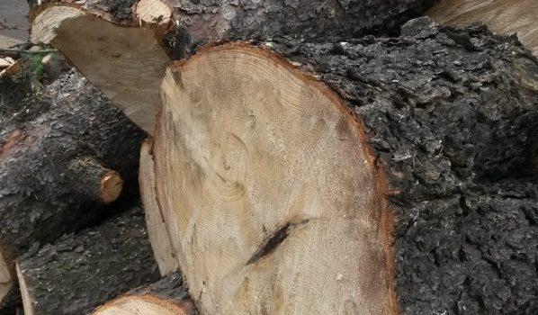 Мужчина нелегально спилил дерево.