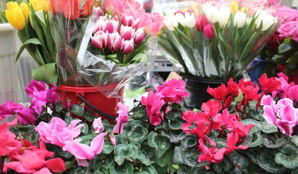 Из павильона украли самые разные цветы.