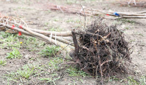 Высадят деревья и кусты.