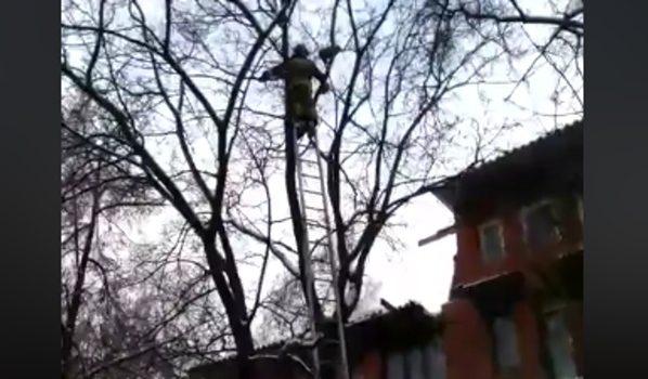 Спасатели сняли кота с высоты.
