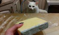 В магазинах вы можете купить некачественный сыр.