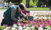 Воронеж украсят цветники.