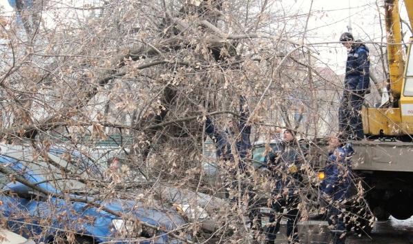 При сильном ветре могут падать деревья.