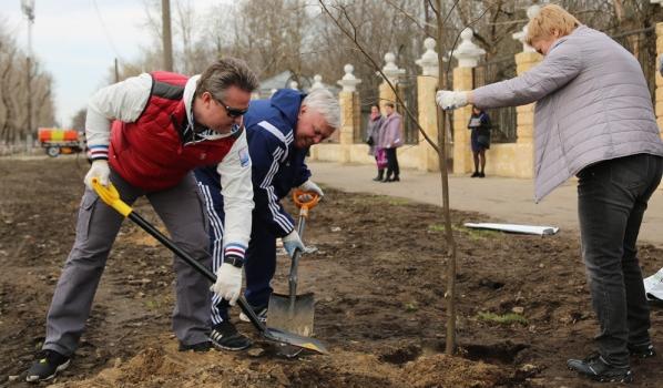 Вадим Кстенин помогает сажать липу.