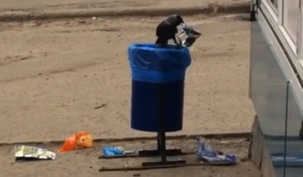 Птица разбрасывала мусор.