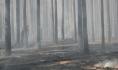 Участились случаи ландшафтных пожаров.
