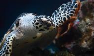 Черепаха из воронежского океанариума.