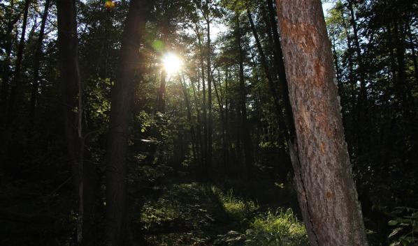 В лесах вас поджидают клещи.