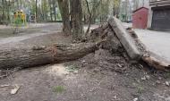 Ветер может повалить деревья.Ветер может повалить деревья.