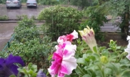 Дождь в Воронеже.