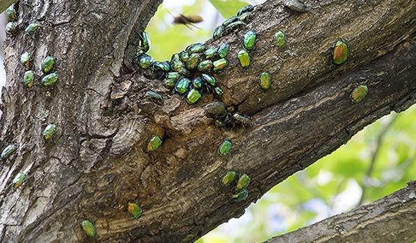 Насекомые скопились на дереве.