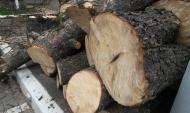 Зараженные деревья вырубили.